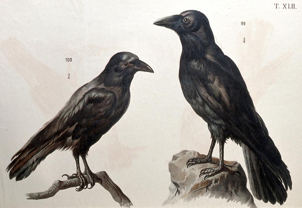 20181023-crows_1024.jpg